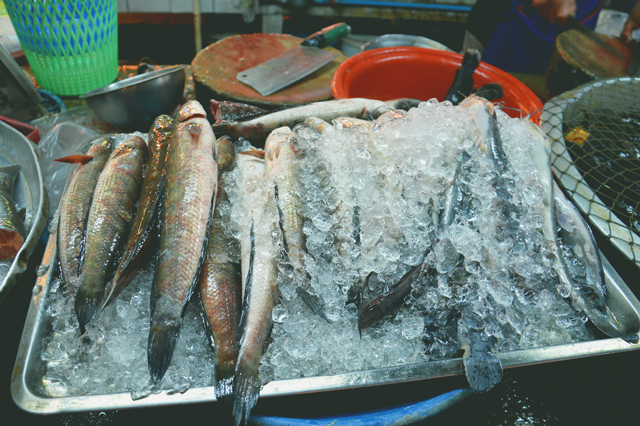 Fresh fish on ice | When in Chiang Mai: Fresh food markets | lizniland.com