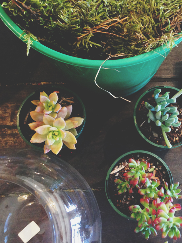 How to make a terrarium | Octopus' Garden | lizniland.com
