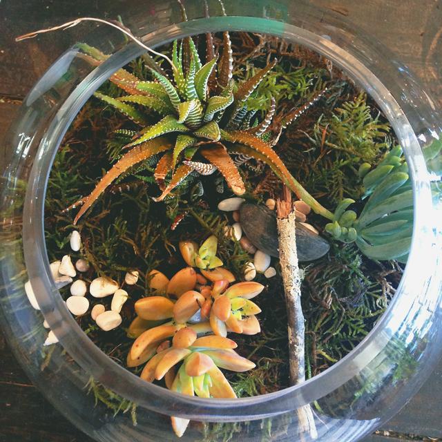 My big terrarium | Octopus' Garden | lizniland.com