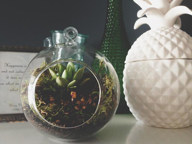 My little terrarium | Octopus' Garden | lizniland.com