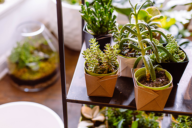 Potted succulents | lizniland.com